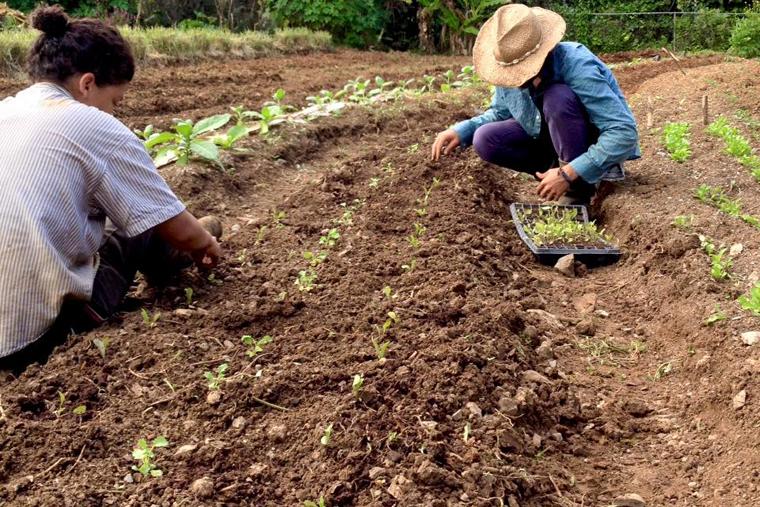 12 Fincas Agroecológicas que hacen Delivery