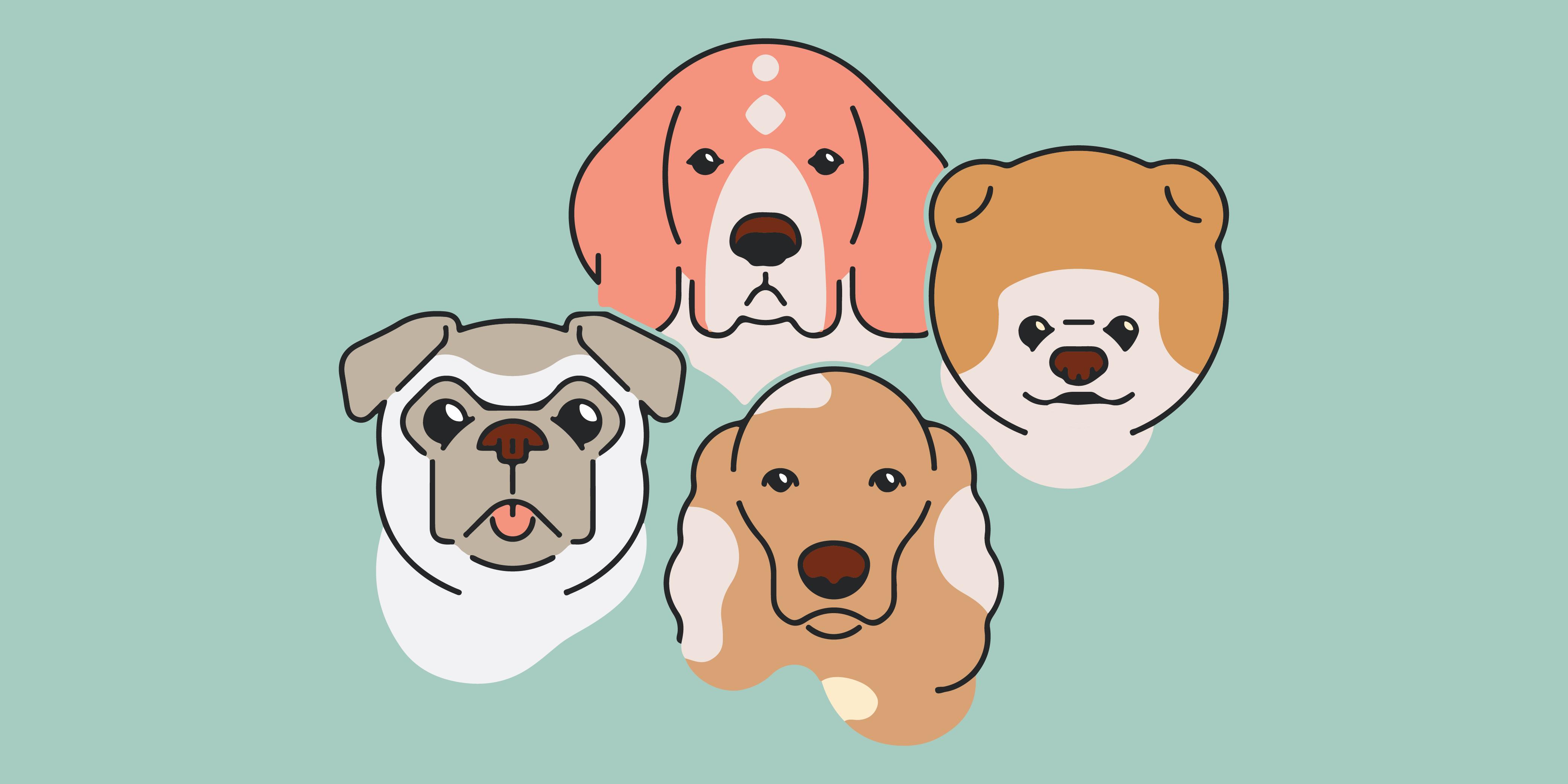 Your Help is Needed: Organizaciones Locales para Rescatar Mascotas