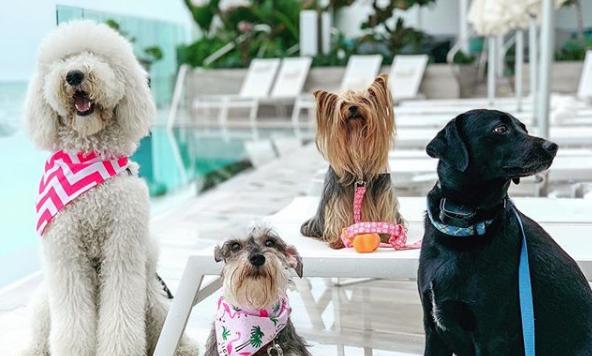 6 hospedajes donde tu mascota la pasará mejor que tú