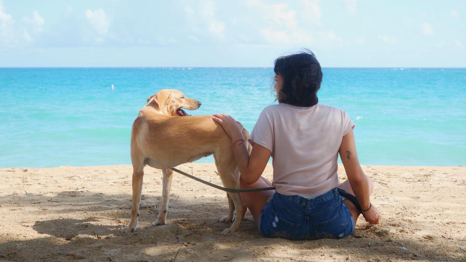 9 tips para un doggy-day en la playa